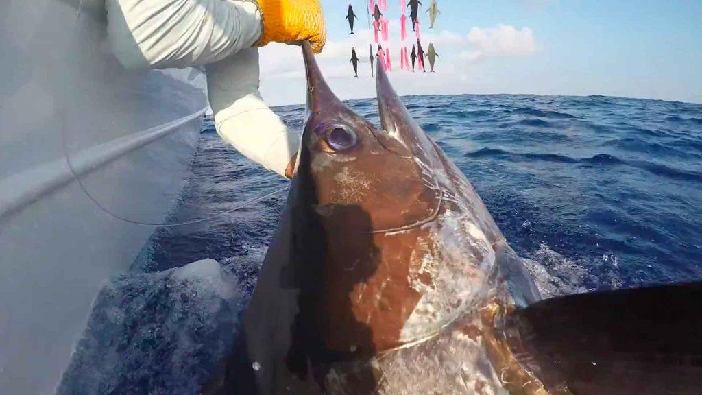 Kona Hawaii Marlin