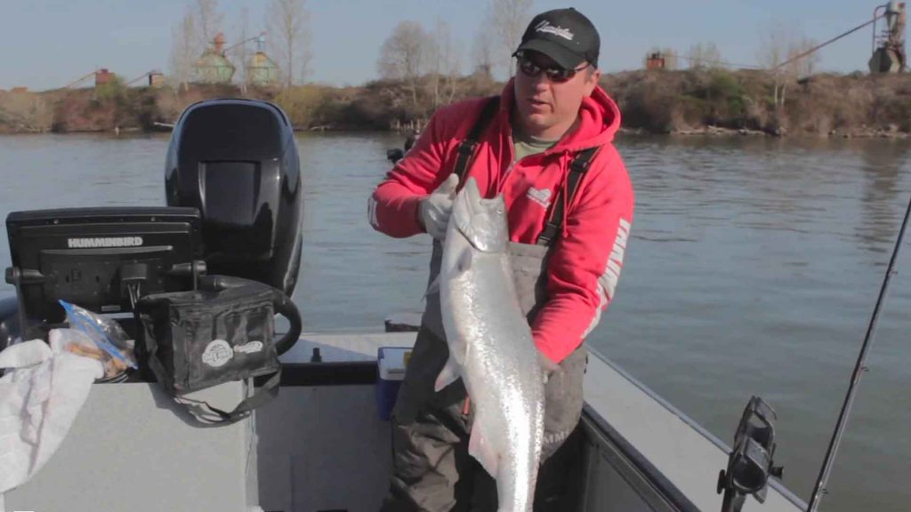 Columbia & Willamette River Spring Chinook